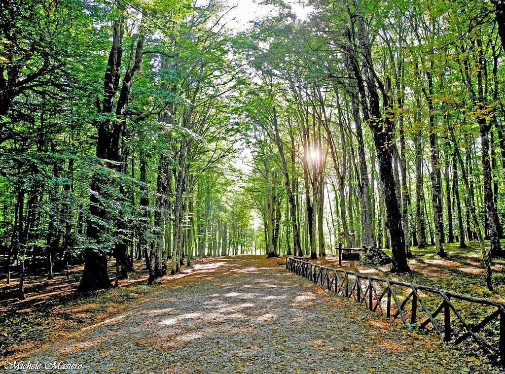 """Foresta Umbra """"Sfilzi – Caritate Baracconi"""""""